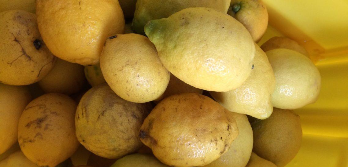 125 kg Zitronen direkt von der Amalfi Küste