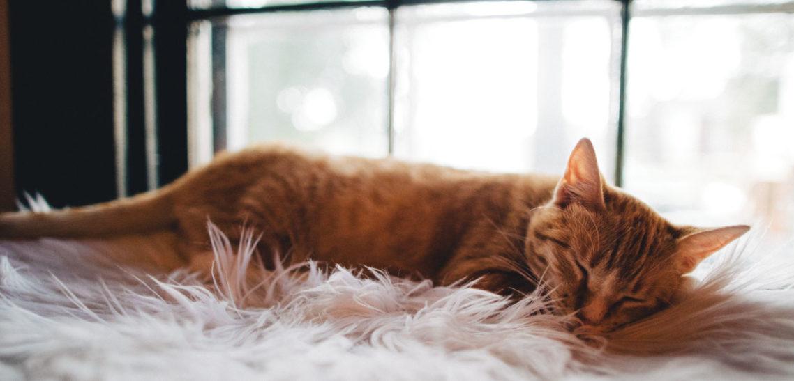 Warum schlafen nicht nur zum Erholen gut ist.